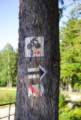 Sygnatury szlaków turystycznych na drzewie