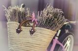 Lavender in basket on bike
