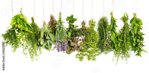 Foto op Canvas Kruiden herbs hanging isolated on white. food ingredients