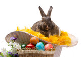 easter bunny, colorful eggs and flowers