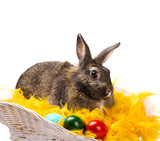 rabbit with  eggs  in  basket