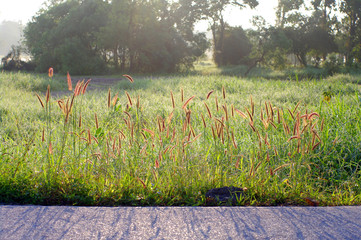 beautiful sun light and grass on road side