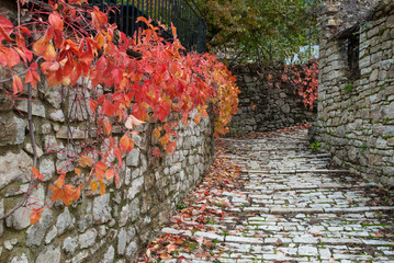 Road with red leaves in a traditional village in Epirus, Greece