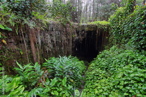 Entrance of one of two Kaumana caves in Big island