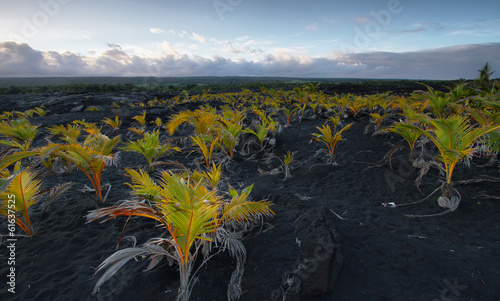 Views of the sea and black lava rocks at sunset