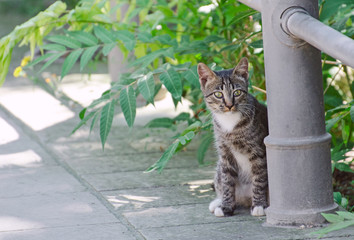 Cute street kitten outdoors.