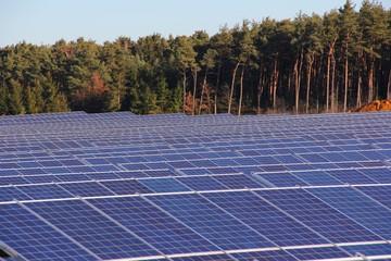 Solarfeld vor Wald