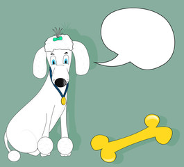 white poodle winner
