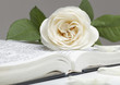 canvas print picture - Bible and the white rose