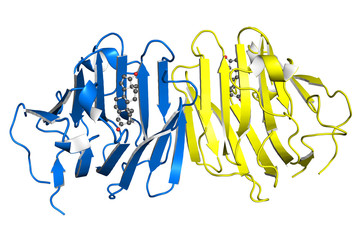 Testosterone-binding globulin protein