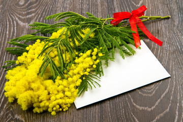 mimosa , festa della donna