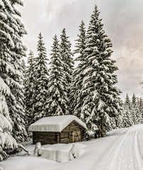 Old forest shanty in winter