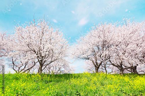 Papiers peints Cerises 日本の春の風景