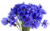 cornflowers isolatedon white background