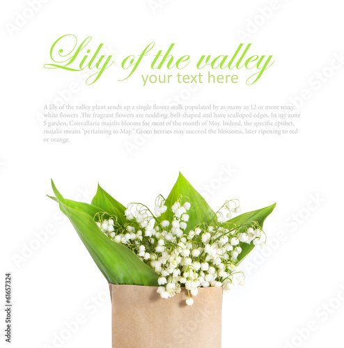 Papiers peints Muguet de mai lily of the valley in a paper bag