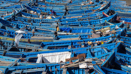 Fishing boats in Essaouira Harbor, Morocco