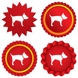 Dog sign icon. Pets medal symbol.