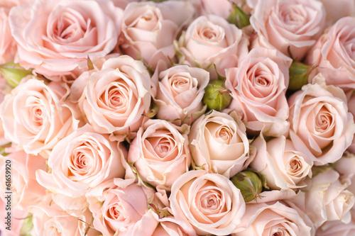 obraz lub plakat Jasne różowe róże w tle