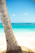 palm tree trunk and beautiful caribbean sea as background