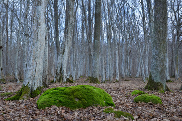 Mossy rock in mystic forest