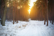 Snowy path in winter forest at sunset