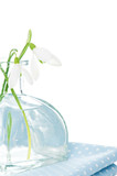 Fresh snowdrops in transparent vase