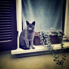 gatto sul davanzale