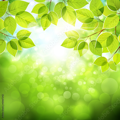 Natural background with leaves. Vector