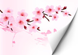 Spring background with a blossoming sakura branch. Vector illust