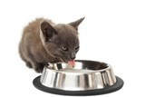 Grey kitten drinking milk from a bowl