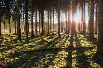 late afternoon sun in forest