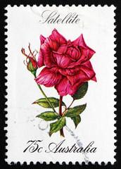 Postage stamp Australia 1982 Satellite, Rose Flower