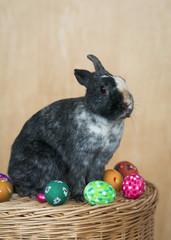 Bunte Eier und Hase