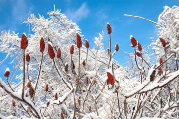 sumac winter celebration after an ice storm
