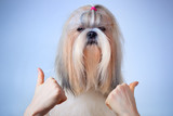 Shih tzu dog handsign