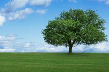 jedno drzewo w polu