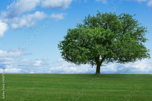 one tree in  field