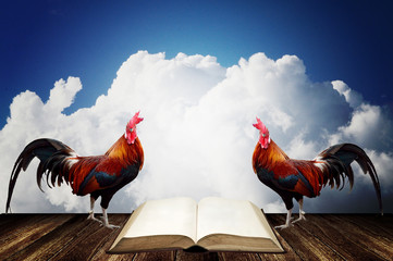 Wake up with rooster crows for read a book