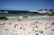 Südafrika - Pinguine am Strand