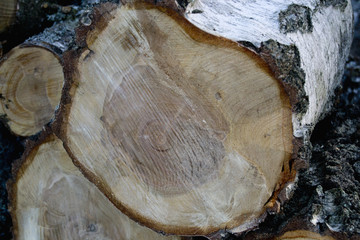 Close-up of some chopped wood (tree, birch)