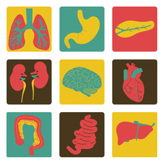 Icons of internal organs