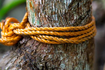 Knot rope in tree