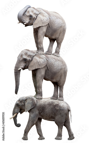 Three elephants.