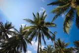 Coconut trees in blue sky