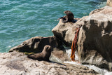 fur seals basking on rocks