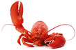 Hello lobster - 61696157