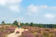 Man walking in heather fields