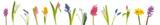 Fototapety Spring flowers