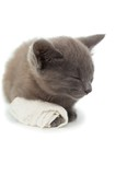 Cute grey kitten sleeping with a bandage on its paw
