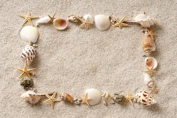 貝殻 砂浜 フレーム